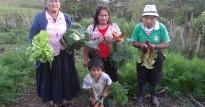 Cosecha de hortalizas en los biohuertos en Montevideo.